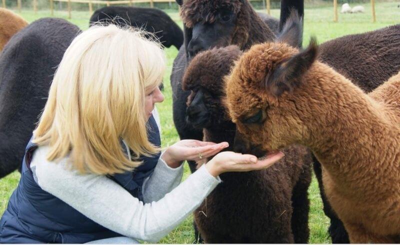 Alpaca Experiences